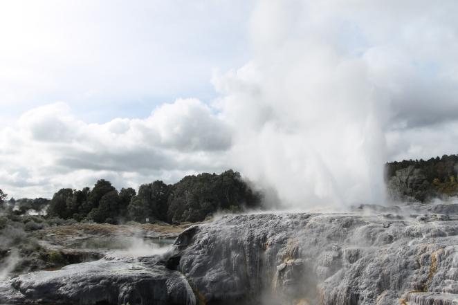 Pohutu erupting at Te Puia